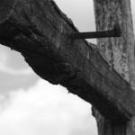 Christ's Sacrifice Once for All (Hebrews 10:1-18)