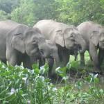 elephantsgather
