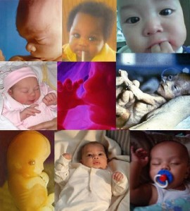 Picture of nine babies