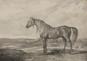 Picture of War Horse