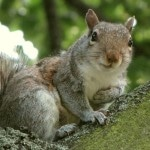 Of Squirrels and Men
